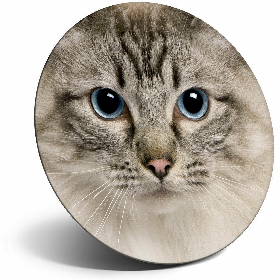 AC-159FM Ragdoll Cat with Blue Eyes Fridge Magnet Stocking Filler Christmas Gif