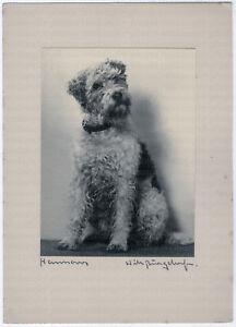 Will Burgdorf, Hundeportrait, handschriftlich signiert um 1930