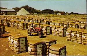tuh-Postcard-Bales-of-Cotton