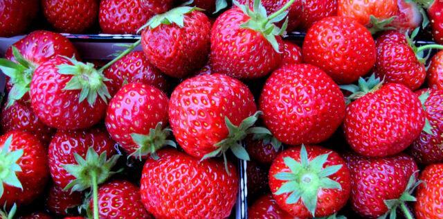 50 GRAINES de FRAISE des 4 (Quatre) Saisons Fruits Parfumée Sucrée