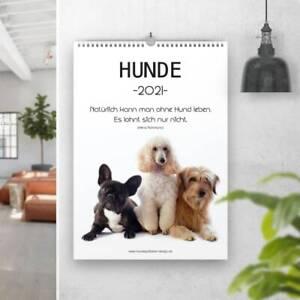Beliebteste Hunderassen 2021