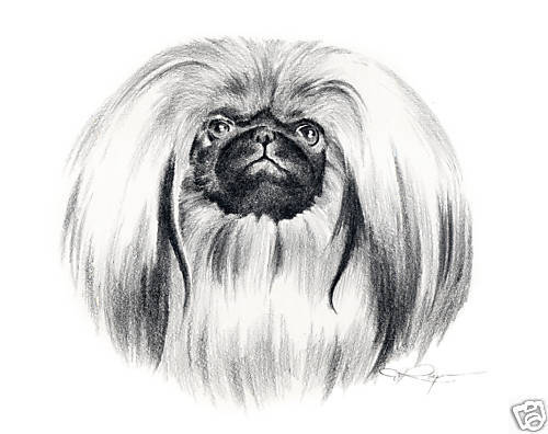 PEKINGESE Dog Drawing ART 13 X 17 Print by Artist DJR