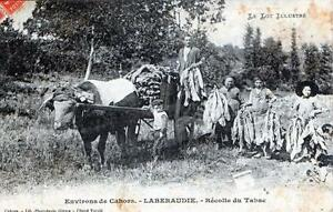 CPA 46 ENVIRONS DE CAHORS LABERAUDIE RECOLTE DU TABAC (GROS PLAN SUPERBE CPA