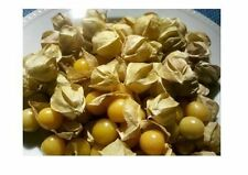 50 seeds Ground Cherry aka Strawberry Husk Tomato Physalis Pruinosa Tomatillo
