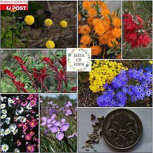 20-AUSTRALIAN-NATIVE-FLOWER-MIX-SEEDS-Beautiful-different-variety-flowers