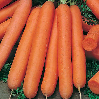 3g (aprox. 2400) carrot seeds NANTAISE 2 one of the best carrot varieties