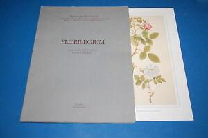 FLORILEGIUM-Cinque-Tavole-dai-Libri-dei-Fiori-Secoli-XVIII-XIX-Il-Bulino