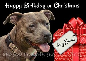 PERSONALISED FUNNY STAFFY BULL TERRIER BIRTHDAY CARD  BLANK INSIDE Glossy A5