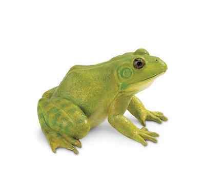 American Bullfrog Replica # 268729 FREE SHIP in USA w/ $25+ SAFARI, Ltd.Products