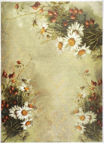 Rice Paper for Decoupage Scrapbook Craft Sheet A//3 Daisies /& Rose Hips Wallpaper