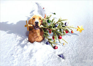 Dog-With-Tree-In-Snow-Box-of-10-Funny-Christmas-Cards-by-Avanti-Press