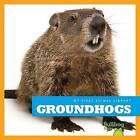Groundhogs by Cari Meister (Hardback, 2015)