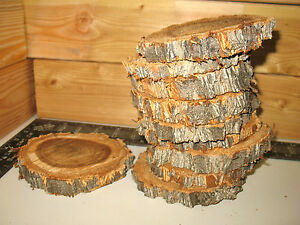 10 Pc 5 To 6 Elm Log Slices Wood Disk Rustic Wedding Centerpiece