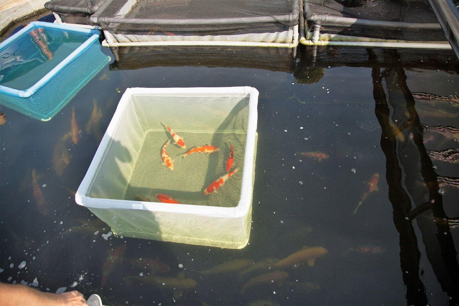 Fisch-Gehege,1,65 x 1,65m Hälterungsnetz,Hälterungsbecken, Koi, Karpfen, Forelle