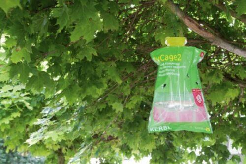 Monitoring Fliegenfalle FlyCage2 Insektenfalle 299851 Kerbl