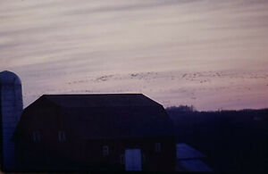 Vintage-Photo-Slide-1986-Geese-Tater-Rd-New-York-Spring-Flying-Over-Farm