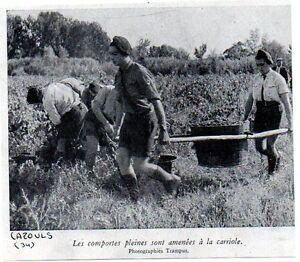 1943-CAZOULS-JEUNES-ENROLES-RECOLTE-A-LA-CAMPAGNE-C435