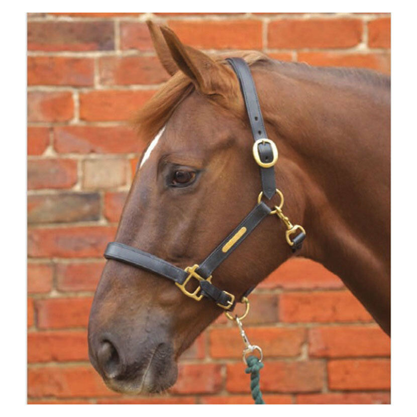 Hy Leather Head Collar Pony Brown