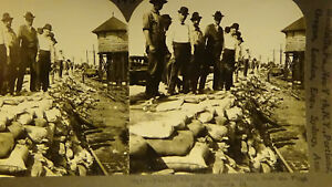 PHOTO-STEREOVIEW-ST-LOUIS-FLOOD-MO-TRAIN-TRACKS-DEPOT-DISASTER-card