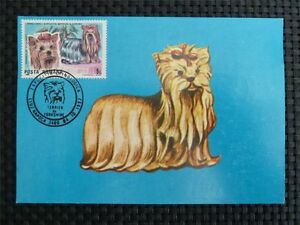 ROMANIA MK DOGS YORKSHIRE TERRIER HUNDE MAXIMUMKARTE CARTE MAXIMUM CARD MC c902 - 68642 Bürstadt, Hessen, Deutschland - ROMANIA MK DOGS YORKSHIRE TERRIER HUNDE MAXIMUMKARTE CARTE MAXIMUM CARD MC c902 - 68642 Bürstadt, Hessen, Deutschland