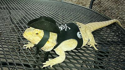 Lil Bestie bearded dragon reptile Harness and Leash You choose color