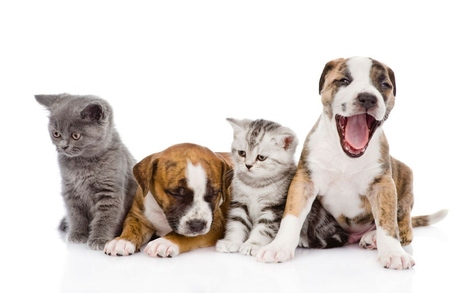 Fresh Fresh Fresh Pet Kennel Cane Disinfettante Doppia Forza Fragranza 4x5L Noce di Cocco 7cd921