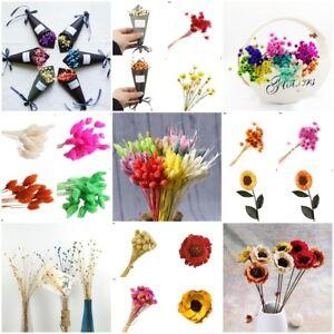 Details Zu Beautiful Dried Flower Diy Craft Gift For Wedding Bouquet Interior Decoration