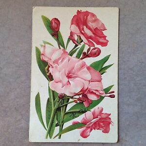 Antique-1907-Postcard-Pink-Flowers-Embossed-Fredericksburg-Indiana-Lofton-Depauw