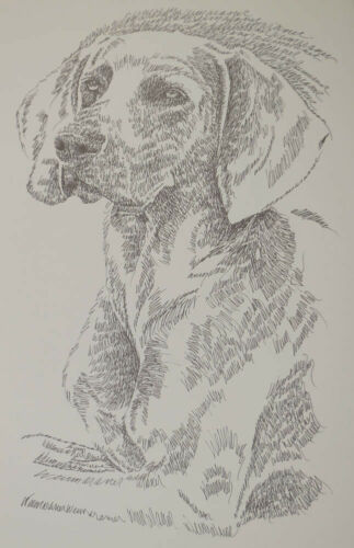 GIFT Vizsla Dog Art Print Lithograph #56 Stephen Kline adds your dogs name free