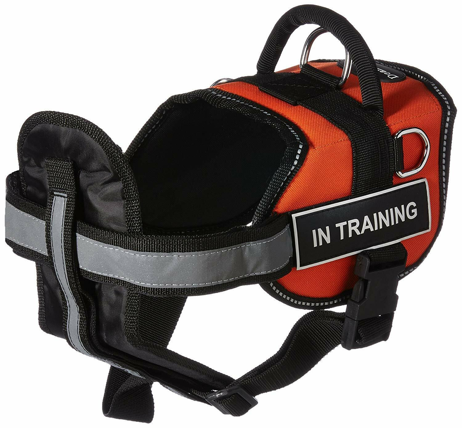 DT Works orange  IN TRAINING  MEDIUM Harness w  Chest Padding & Padded Leash
