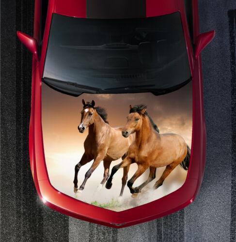 H105 HORSE HORSES Hood Wrap Wraps Decal Sticker Tint Vinyl Image Graphic