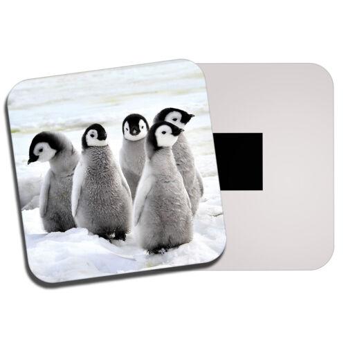Emperor Penguin Chicks aimant de réfrigérateur-Antarctique Snow Ice Bird Cool Cadeau #13280