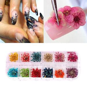 12 Colors Real Nail Dried Flower Nail Art Decor Design Diy Tips