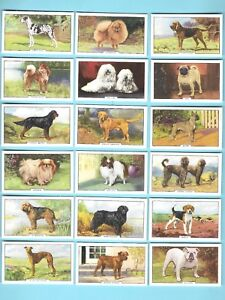 CIGARETTE-CARDS-Gallaher-Tobacco-DOGS-2nd-Series-Complete-Set-of-48-1938