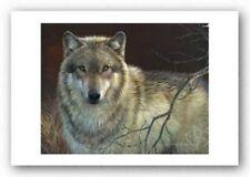 Curious Red Fox by Joni Johnson-Godsy Animal Wildlife Nature Print Poster 13x19