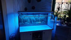 Aqarium-300-Liter-mit-Unterschrank-neuwertiger-Filter-Beleuchtung