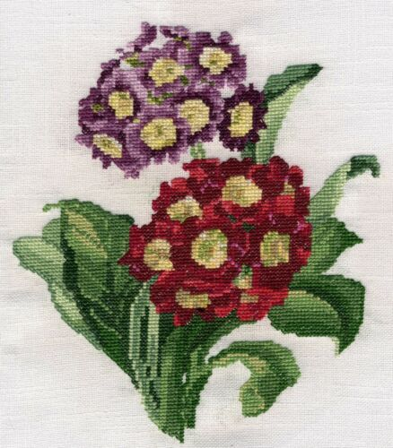 Cowslip or Primula Auricula counted cross stitch kit or chart 14s aida