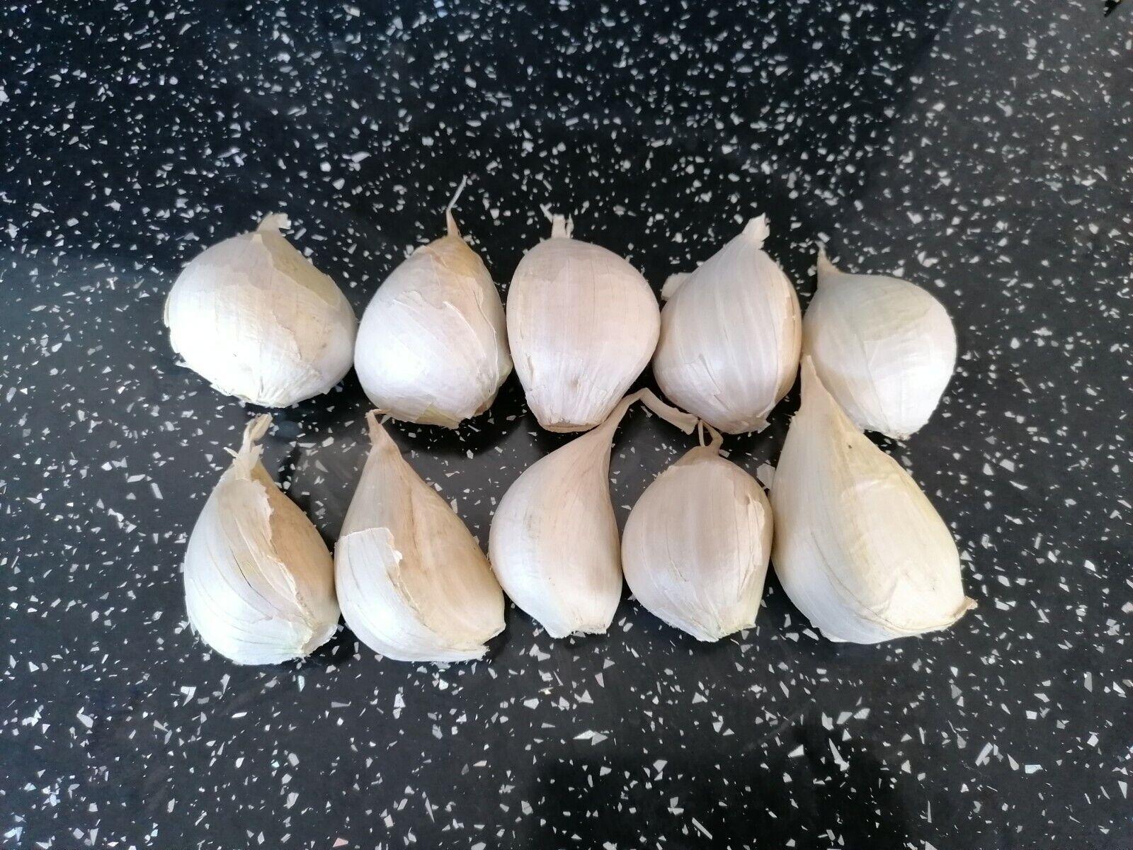 Elephant Garlic seed- 10 cloves Isle of Wight NEW SEASON