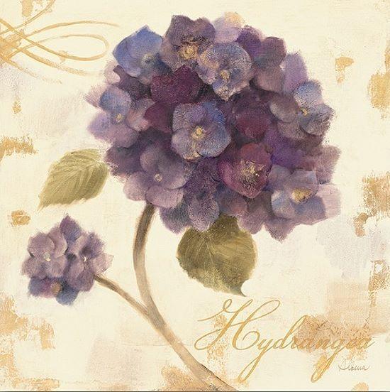 Albena Hristova  Abundant Hydrangea I Keilrahmen-Bild Leinwand Blaumen lila