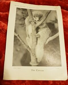 The-Cuscus-Vintage-Book-Print