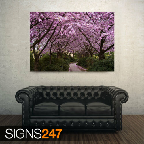 AE054 NATURE POSTER SPRING PINK TREES Photo Poster Print Art A0 A1 A2 A3 A4