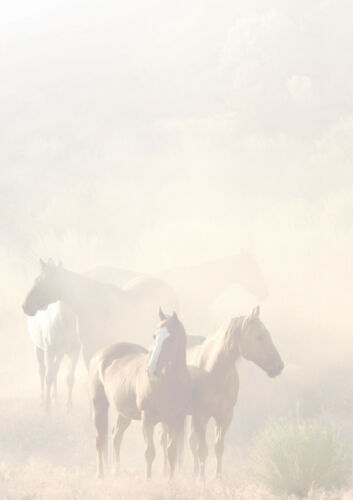 100 Blatt Motivpapier-5016 Pferde im Nebel DIN A4 Briefpapier TOP