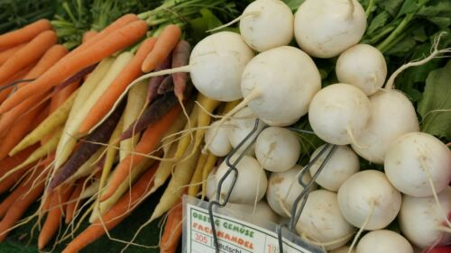 Details about  /White Globe Radish Heirloom Seeds Non GMO Delicious Classic Top Seller