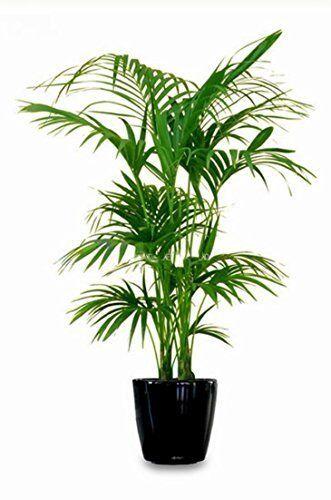 17.5cm Zuverlässige Gießanzeiger Wasserstandsanzeige für  Topfpflanzen
