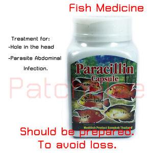 Medicine For Flowerhorn Fish Hole In The Head Parasite Abdominal
