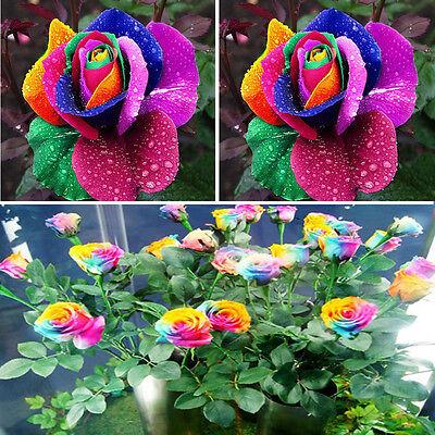 200 Pcs//Bag Multi-Color Rainbow Rose Flower Seeds Home Garden Easy Grow Plant w//