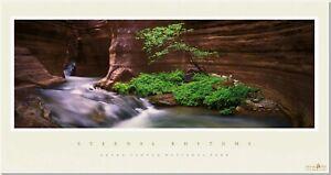 Eternal Rhythms; Redbud Tree Drinker Durrance Grand Canyon National Park AZ