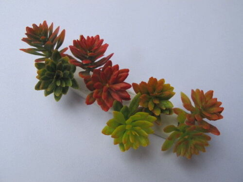 1 miniature succulenta pianta Freddo Caldo Varie Tonalità Bush Doll House da giardino S1