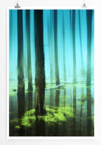 Bild 60x90cm Poster  Baumstämme im Moor