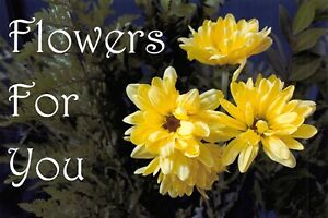 PACK-of-3-New-FLOWERS-FOR-YOU-Postcards-Yellow-Flower-Design